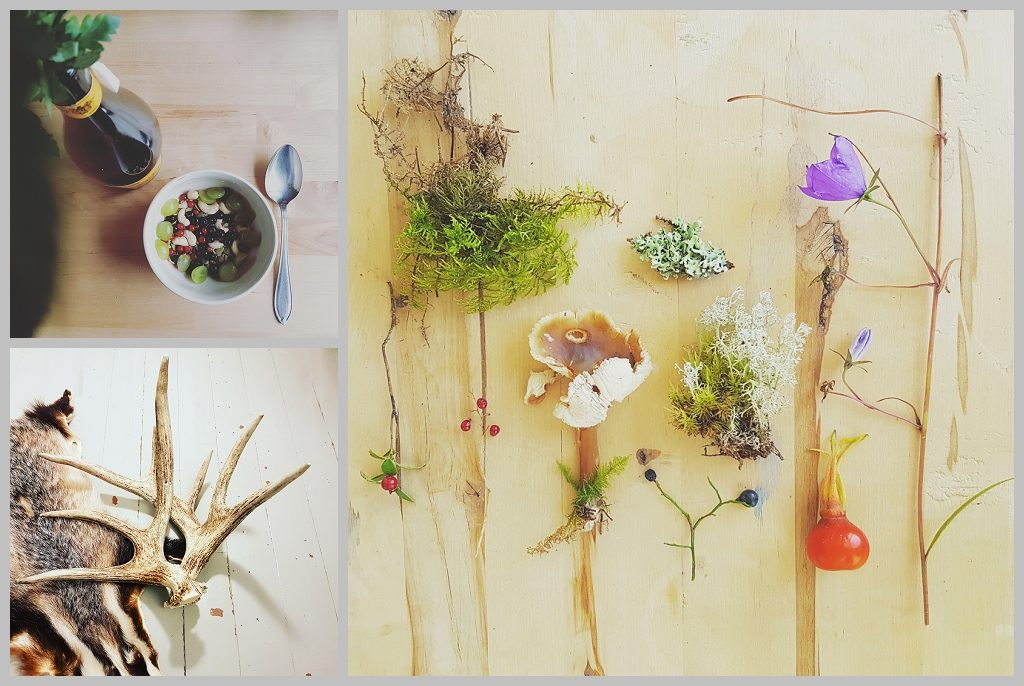 Foraging for berries fungi, lichen and flowers in the woods around Arteles artist residency Finland by Natalie Field.