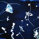 Cyanotype alternative print workshop botanical blueprints inspired by photographer Anna Atkins fineartphotography Johannesburg South Africa
